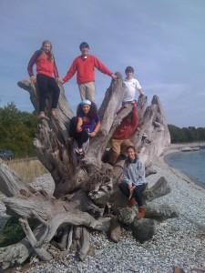 vsie_driftwood